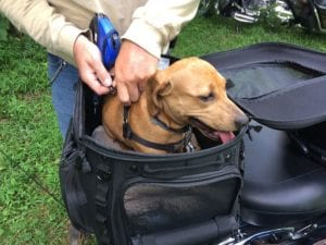 Dog In Special Motorcycle Carrier